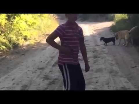 Remény a gyógyulás útján - Videóval!  #kutya #vizsla #állatmentés #dog #rescue #kutyabaráthelyek #kutyabarathelyek