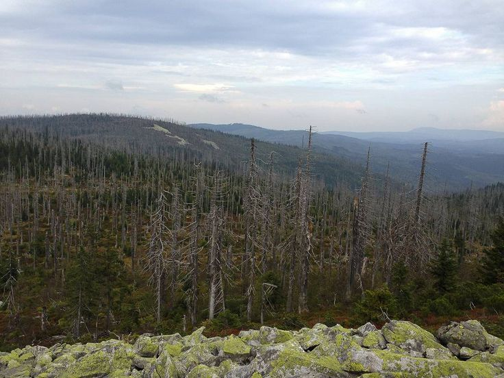 Rückblick vom Lusenanstieg auf den Fleckenstein