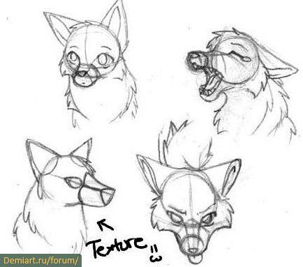 Best 25 how to draw wolf ideas on pinterest how to draw dogs how to draw wolves ccuart Choice Image
