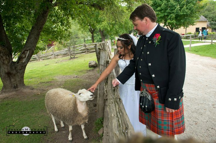 Bride petting a sheep, groom pretty cautious about petting the sheep. Not that funny, but man was that one friendly sheep.  Taken at Black Creek Pioneer Village in Toronto.