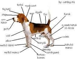 kutyák fajtái - Hľadať Googlom