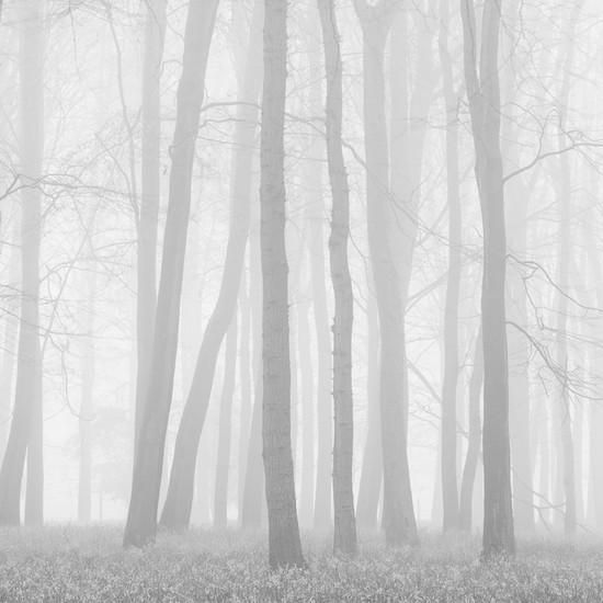 Morning Mists II Photographic Print by Doug Chinnery at Art.com