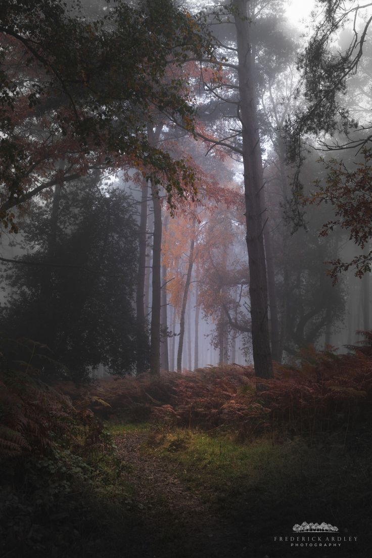 Autumn Forests of the United Kingdom Photographed By Frederick Ardley
