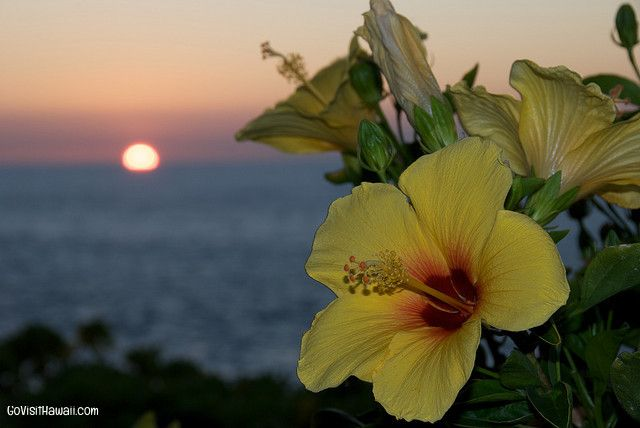 Hawaii vacation deals & news: March 11, 2014   Go Visit Hawaii