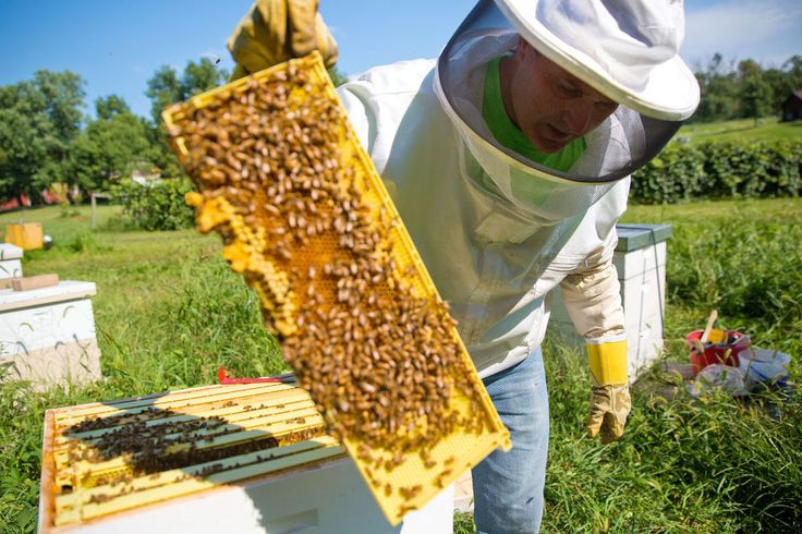 Keeping bees healthy is something that should matter to everyone, beekeepers say, because 85 percent of foods are derived from honeybees.