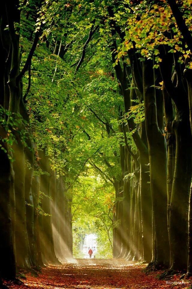 Autumn lights, Midwolde Gronagene, The Netherlands