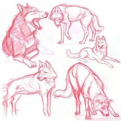 Wolf movements