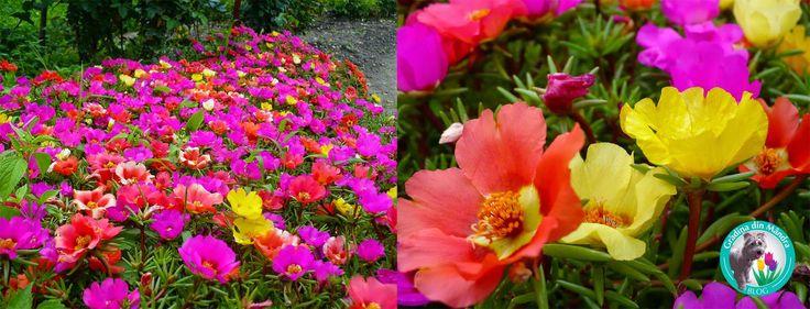 Gradina din Mandra: 8 flori de gradina care infloresc toata vara