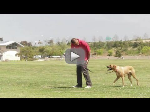 How to Teach a Dog Not to Guard Against Other Dogs : Dog Behavior & Training - Subscribe Now: http://www.youtube.com/subscription_center?add_user=ehow  Watch More: http://www.youtube.com/ehow  Teaching a dog not to guard against other dogs can help turn your pet into a more social creature. Teach a dog not to guard against other dogs with help from a certified dog behavioral therapist and master trainer in this free video clip.  Expert: Justin Scher Filmmaker: Rafael Rodriguez  Series
