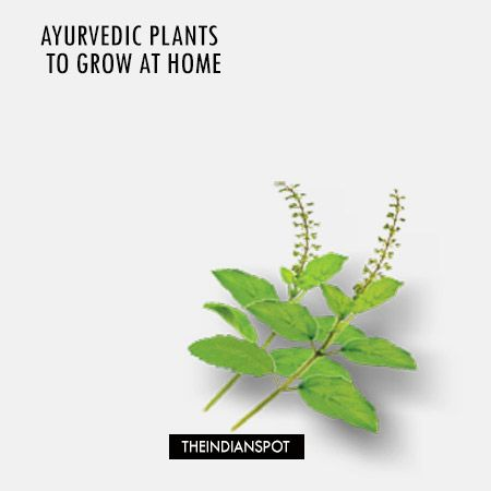 Growing a mini-Ayurvedic pharmacy at home isn't as hard as you might think—and the benefits are huge. Imagine you are in need of an Ayurvedic...