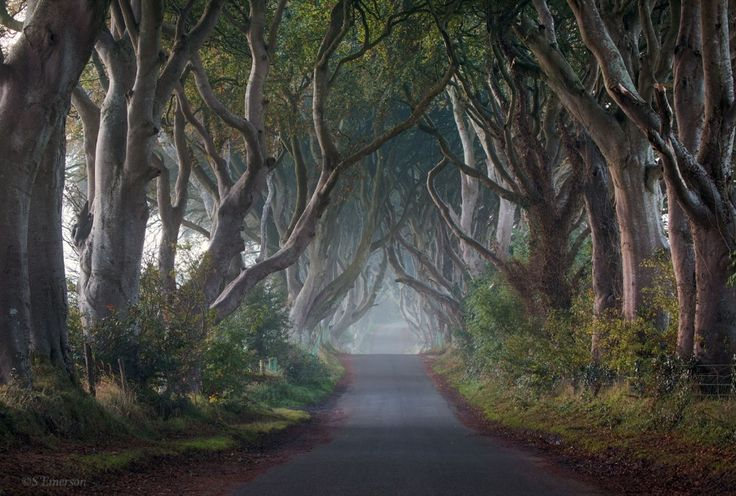 The Hedges by Stephen Emerson