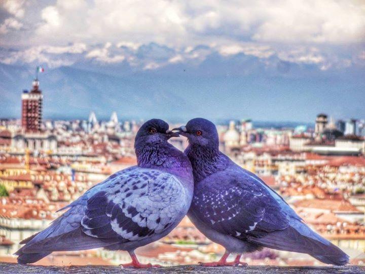 """Due """"piccioncini"""" con Torino alle spalle  Bellissima foto di Jaloliddin Yusupov (thank you!)"""