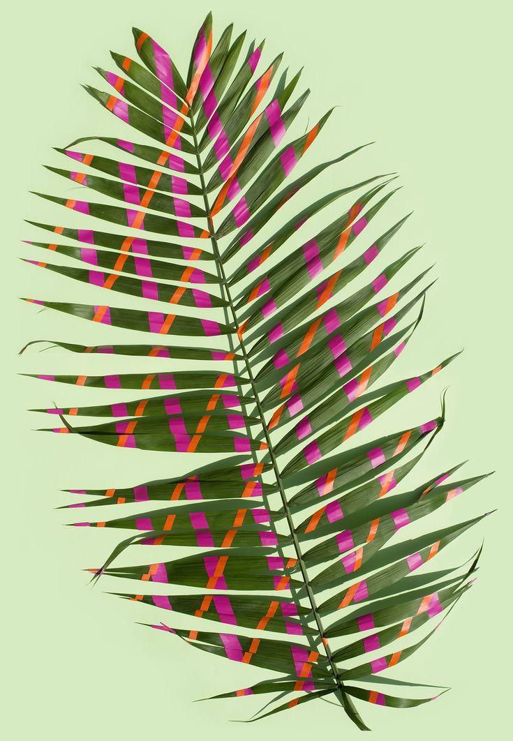 Palm by Sarah Illenberger | sightunseen.com