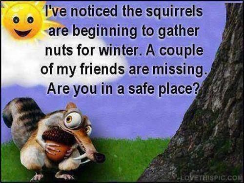Autumn Humor: I've noticed the squirrels are beginning to gather nuts for winter. A couple of my friends are missing. Are you in a safe place? LOL