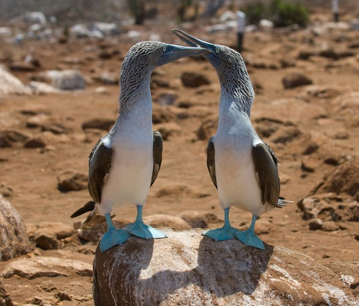 Unmatched Wildlife - 10 Reasons to Visit South America