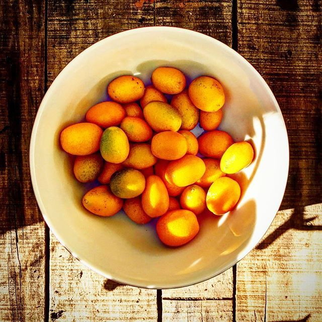 A good haul from the Kumquat tree! Kumquat jam is now setting in the fridge 🍊