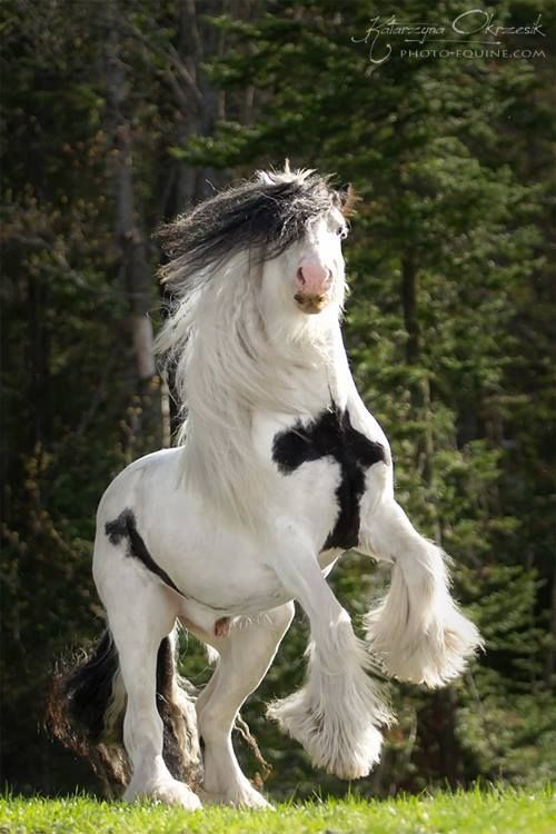 17 Best Images About Horses I D Love To Own On Pinterest