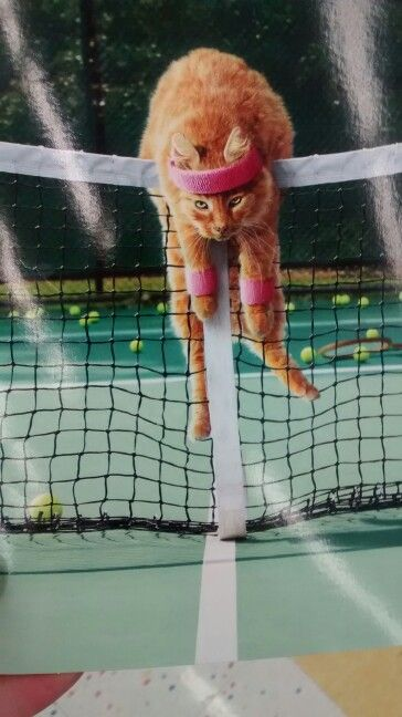 """Kitty-Cat: """"Hey Serena!  Please toss me that ball; I can't seem to reach it!"""""""