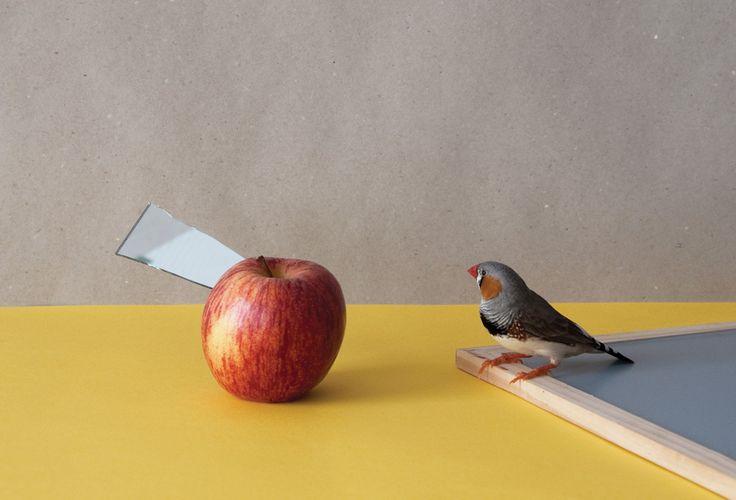 Bird with apple by Csilla Klenyánszki