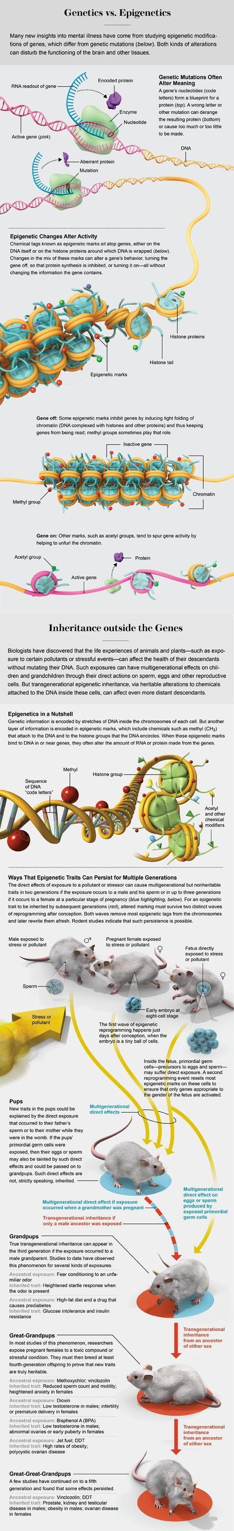Gene Regulation, Illustrated                                                                                                                                                                                 More