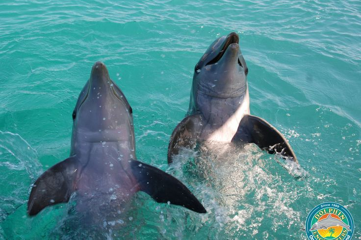 Blue Lagoon Island Dolphin Encounters: Nassau Attractions Review - 10Best Experts and Tourist Reviews