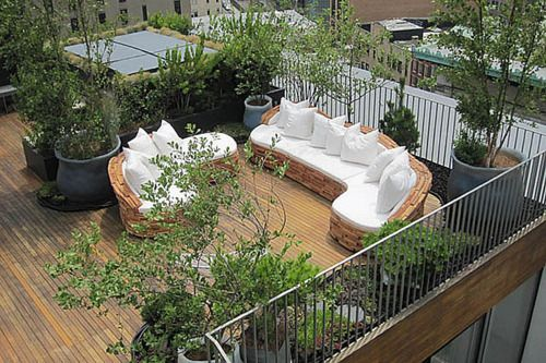 rooftop garden couches, plants, olive tree decking