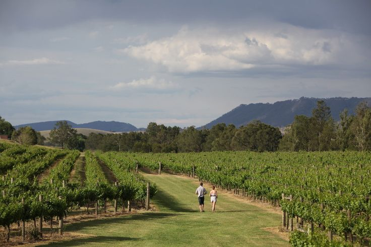 Wyndham Estate NSW - Hunter Valley holidays for wine lovers. http://www.ozehols.com.au/blog/new-south-wales/motels-in-cessnock-in-hunter-for-those-who-love-their-wine/ #hunterholidays #huntervalleyholidays #winelovers
