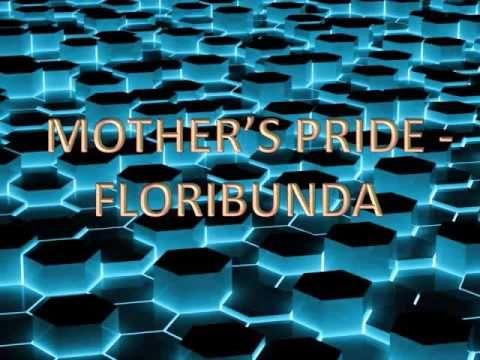Mother's Pride - Floribunda