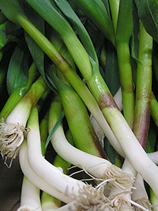Green garlic is just one of three gifts the garlic plant gives us in its life cycle.