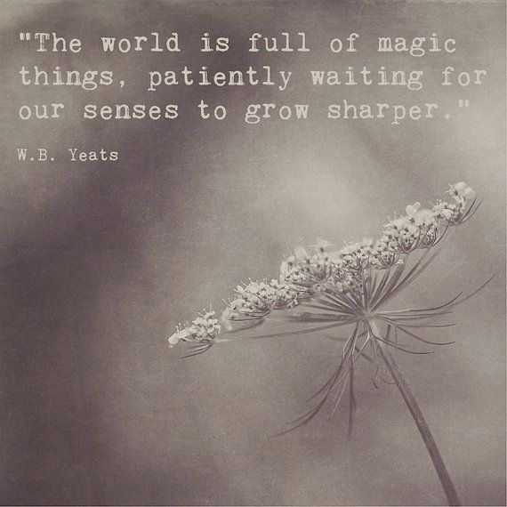 Queen Anne's Lace Photograph | Inspirational Quote W.B. Yeats | The World is Full of Magic Things | Sepia Black and White | Square Wall Art