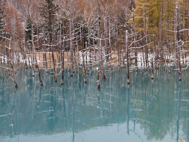 2016.10 北海道 #青い池#北海道#美瑛#雪#日本#一人旅#カメラ