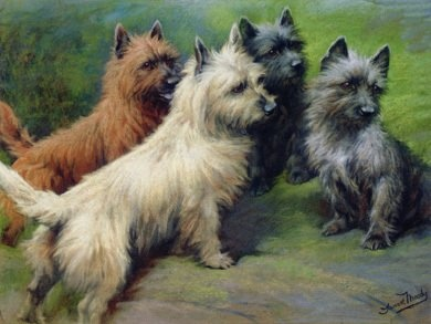 Cairn terriers / I love the colors of these dogs