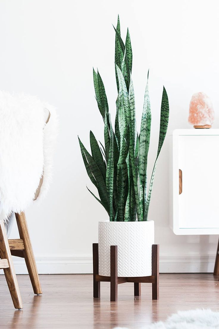Mid-century plant stand made from locally sourced wood. It's what your home is missing.