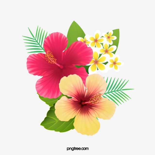 Fresh Hibiscus Flowers Creative Cartoon Png Transparent Clipart Image And Psd File For Free Download Hibiscus Flower Drawing Flower Drawing Flower Painting
