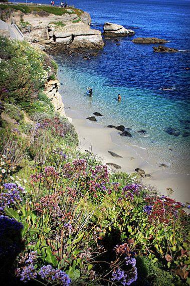 La Jolla Cove with flowers