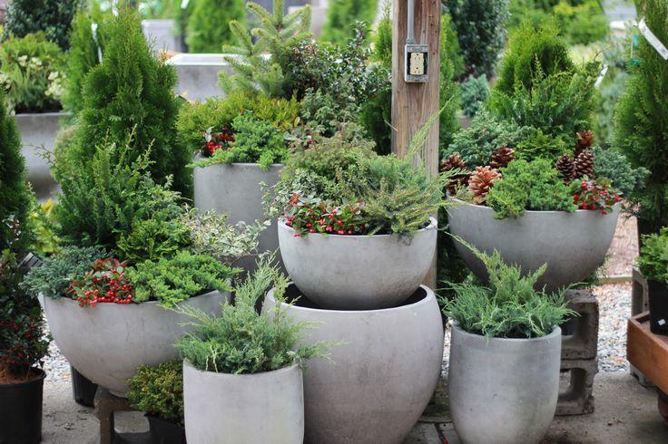 Winter Container Gardens- Nielsen's Florist