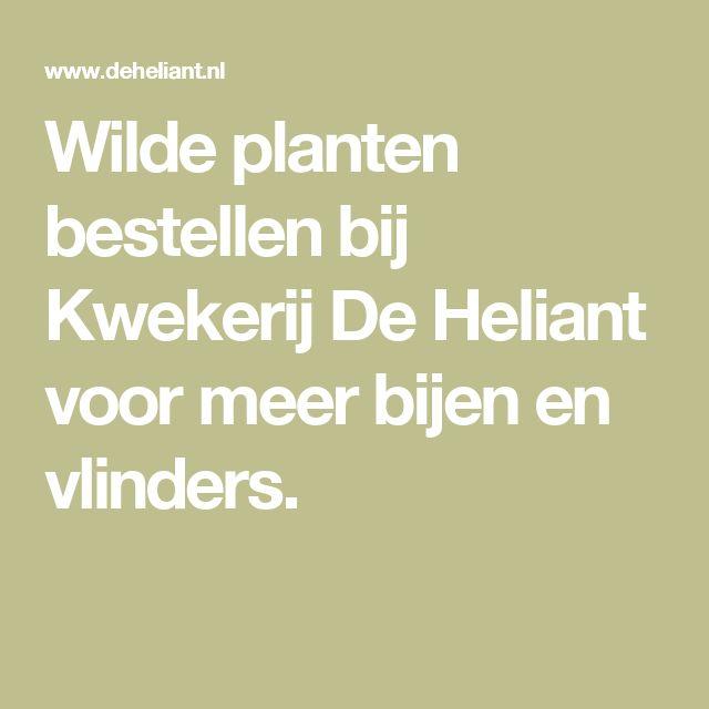 Wilde planten bestellen bij Kwekerij De Heliant voor meer bijen en vlinders.