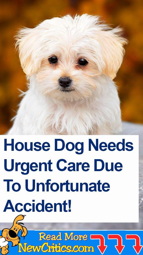 House Dog Dogs Pregnant Dog Dog Safe Medicine