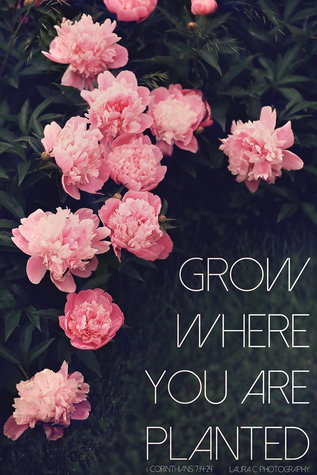 Grow Where You Are Planted   1 Corinthians 7:14-24   Bible ...