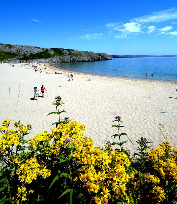 Barafundle Bay in Pembrokeshire - the most beautiful beach in the world.