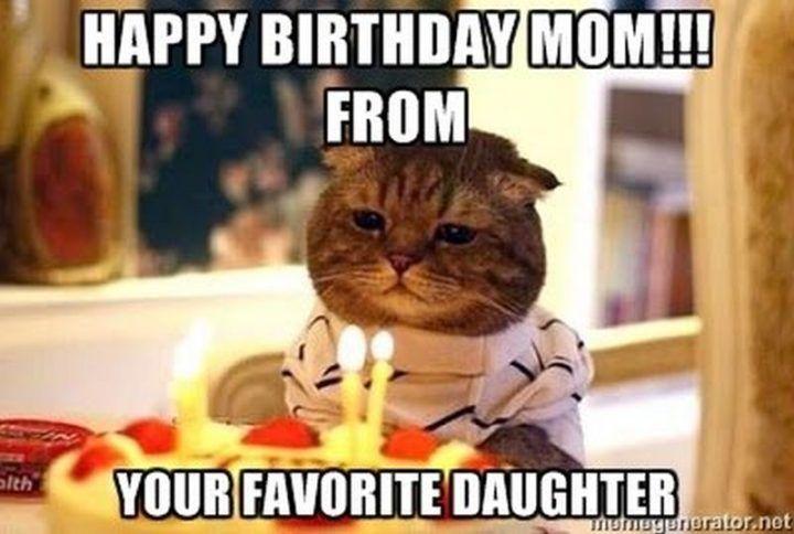 101 Funny Cat Birthday Memes For The Feline Lovers In Your Life Happy Birthday Mom Funny Happy Birthday Mom Quotes Cat Birthday Memes