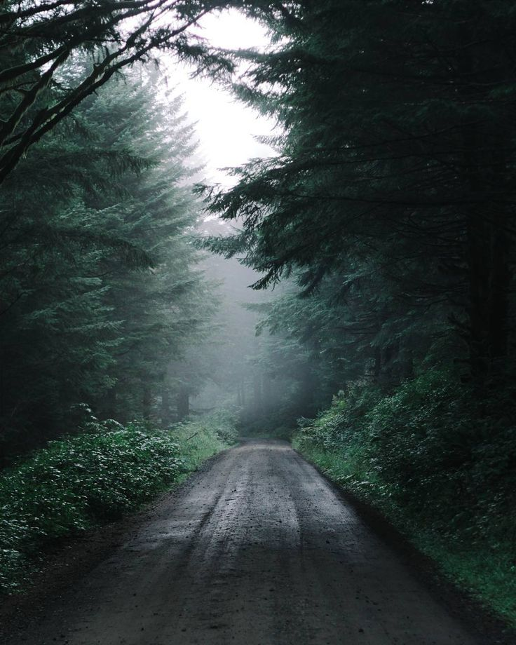 """""""Just another forest road."""""""