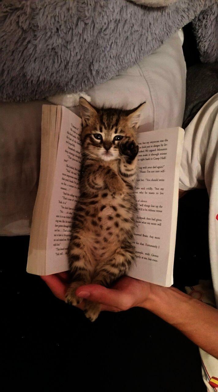 Um The Cat Gave It To Me Gatos Gatos Bonitos Gatos Tiernos