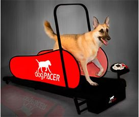 Pet Exercise - Jog A Dog Portable Foldable Treadmill. No time for pet walking? Pet gifts for any friends with obese pets.