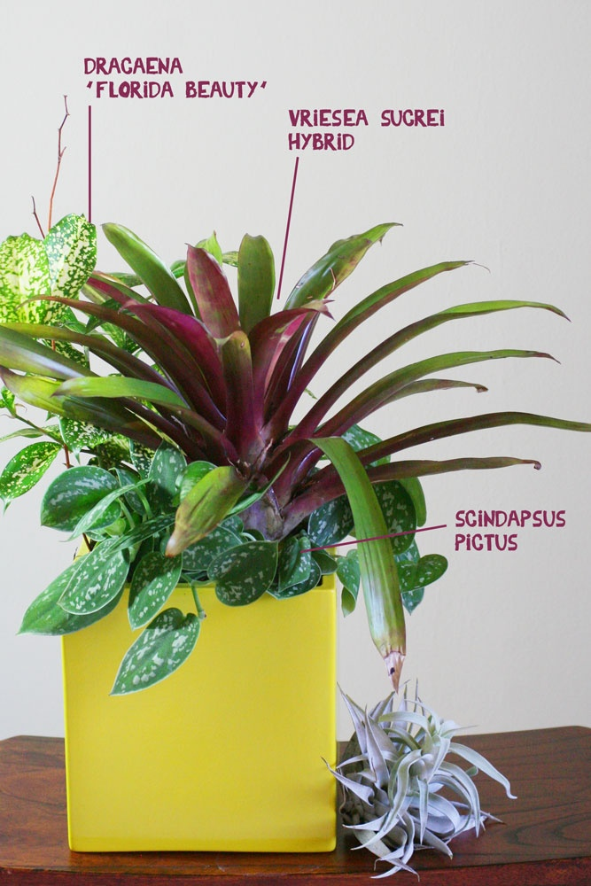 45 Best Ideas About Tropical Color Container Garden On