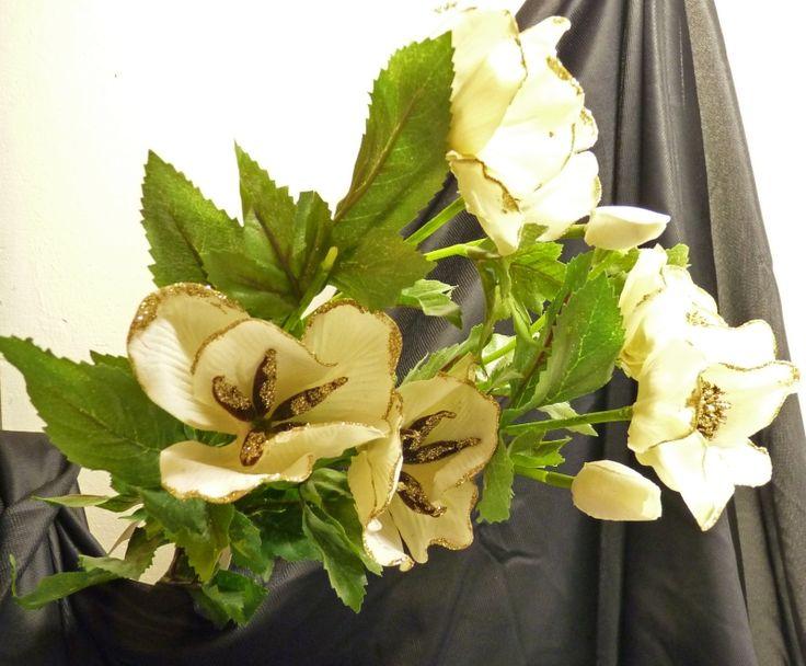 Helleborus, Christrose 3 Blüten, 2 Knospen - 62 cm