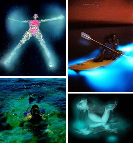 Natural Phenomenon Bioluminescent Bay at La Parguera on Vieques Island in Puerto Rico