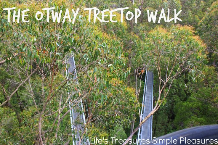 Life's Treasures & Simple Pleasures: The Otways ~ The Otway Treetop Walk