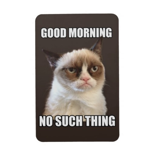 Good Morning Cat Meme : Images about grumpy cat on pinterest