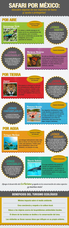 #Safari por #Mexico #Fauna #Ecoturismo #EspeciesenPeligro #TurismoResponsable #Infografia #Infographic Reserva tus vuelos hacia alguno de los destinos de México, desde aquí: http://www.bestday.com.mx/Vuelos/
